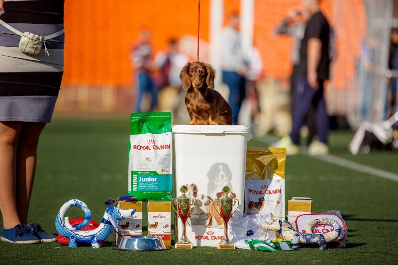Royal Canin Renal для собак с хронической почечной