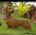 Helga SSV Von Bose Hunde