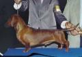 Reich SSV Von Bose Hunde
